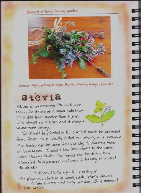 Garden journal-Stevia
