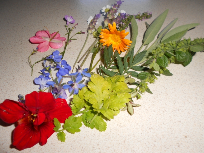 flowers and leaves for pressing