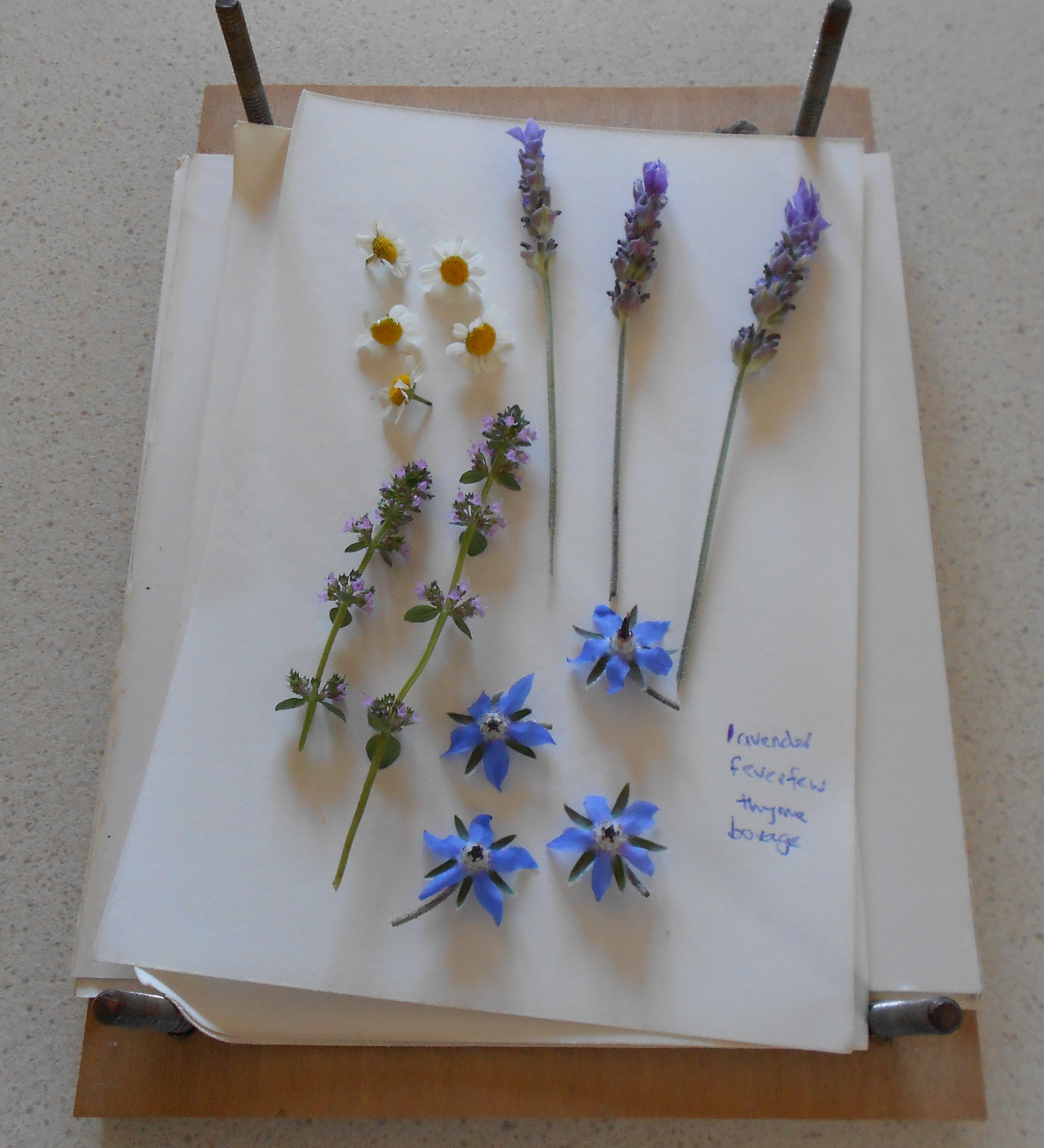 How to scrapbook pressed flowers - Herbs For Pressing