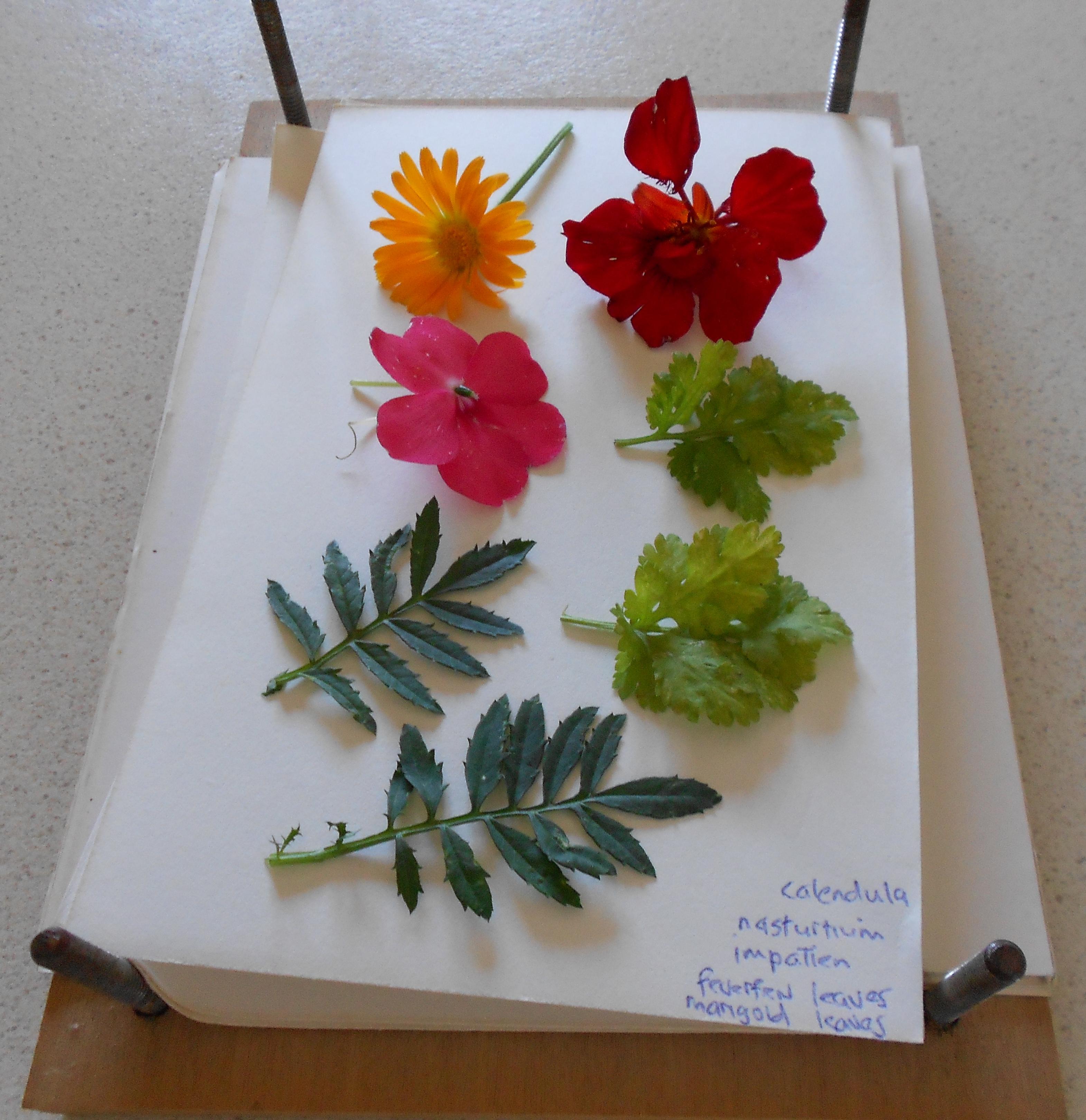 Pressed Flowers Kristah Price
