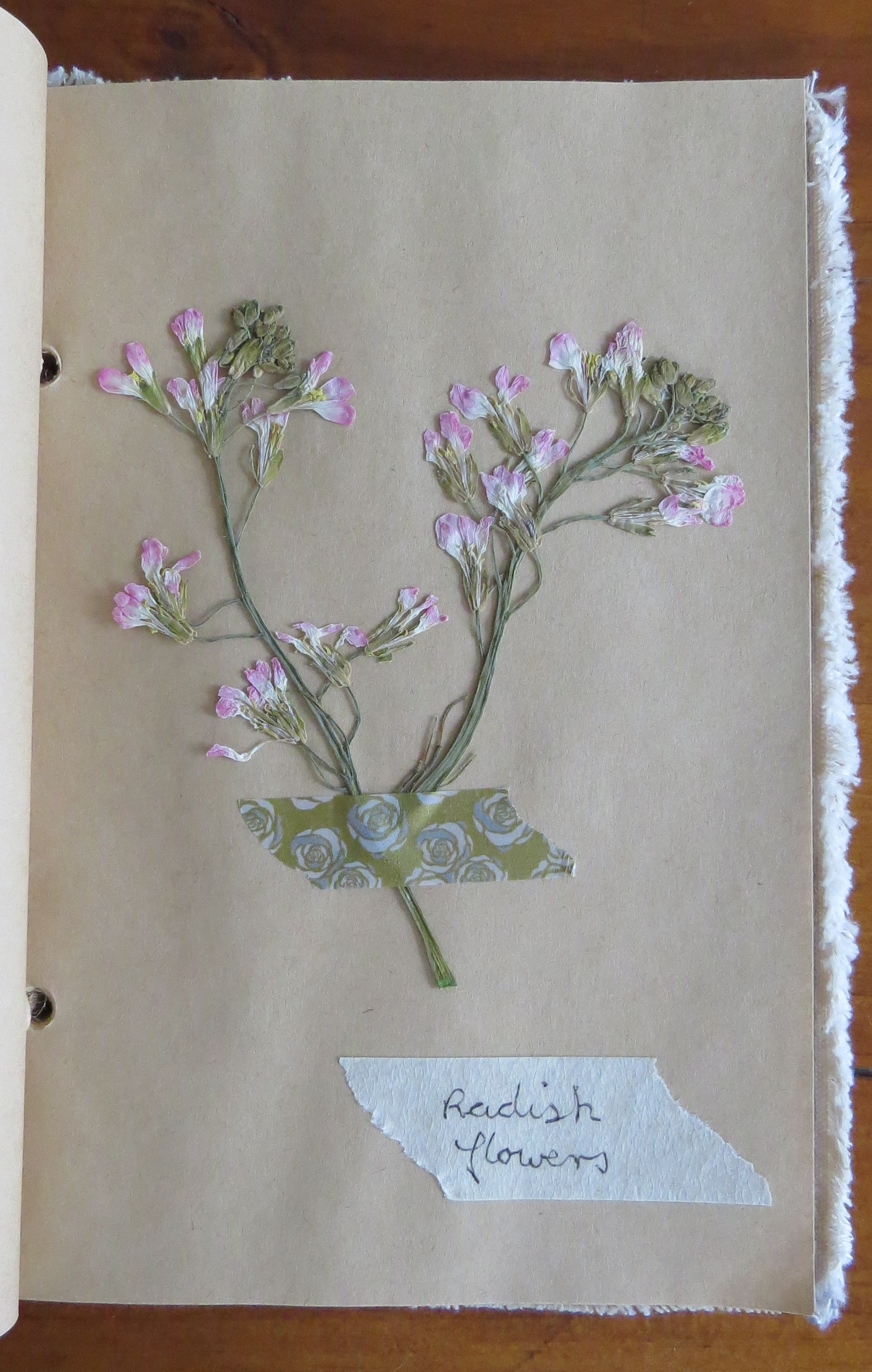 How to scrapbook pressed flowers - Radish Flowers