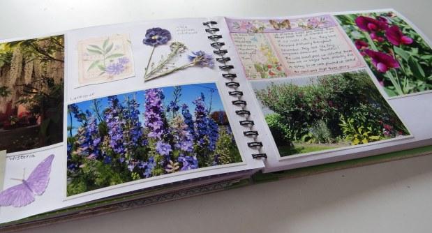 Garden Journal November